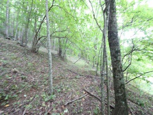 Wooded Blue Ridge Acreage : Independence : Grayson County : Virginia