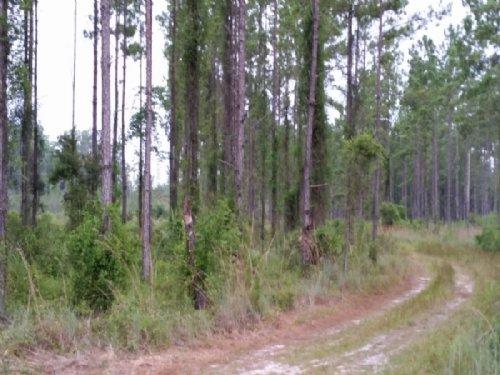 20.98 Acres Land For Sale : White Oak : Camden County : Georgia