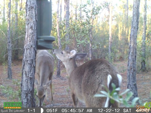 39.02 Acres For Hunting : Perry : Taylor County : Florida
