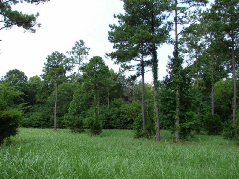 Game Rich, Private Hunting Land : Collirene : Lowndes County : Alabama