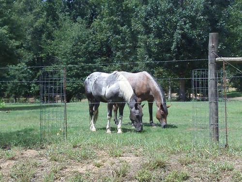 Barnes Mountain Farms - 5.40 Acre : Monticello : Jasper County : Georgia