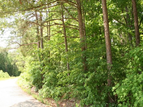 10 Wooded Acres On Nichols Rd : Powhatan : Virginia