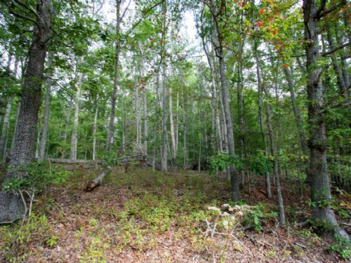3.216 Acres On Paige Rd : Woodford : Caroline County : Virginia