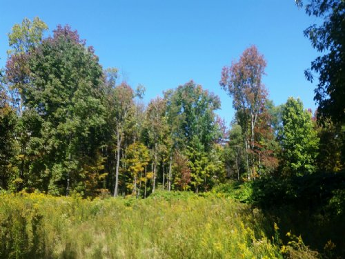Woodlands Bordering State Forest : Annsville : Oneida County : New York