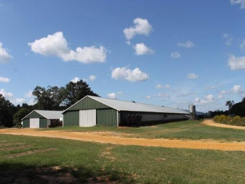 Cedarsville Breeder Farm : Glenwood : Pike County : Alabama