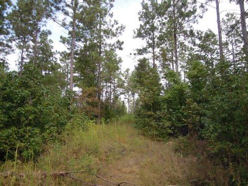 60+/- Acres Of Timberland : Hardin : Jefferson County : Arkansas