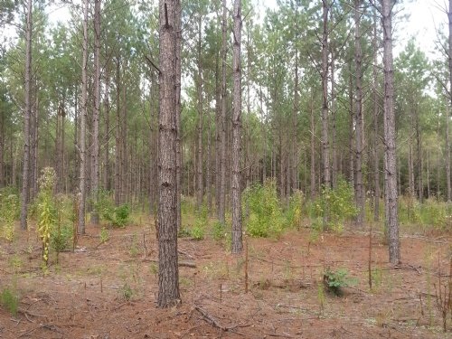 Scott Property : Titus : Elmore County : Alabama