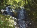 59 Acre Cattle Farm With Waterfalls : La Suiza De Turrialba : Costa Rica
