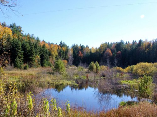 Pristine Hunting Land : Shelby : Oceana County : Michigan