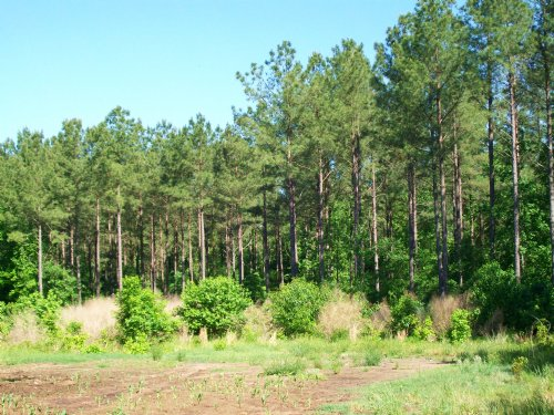 478 Acres : Bishopville : Lee County : South Carolina