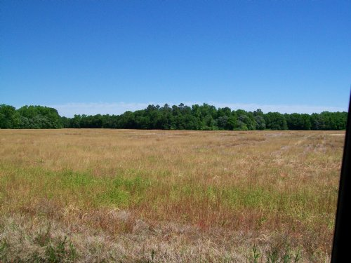 92 Acres : Bishopville : Lee County : South Carolina