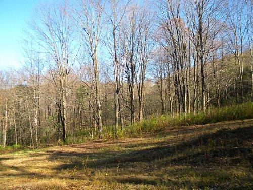 Woodlands Perfect For A Sugar Bush : Virgil : Cortland County : New York