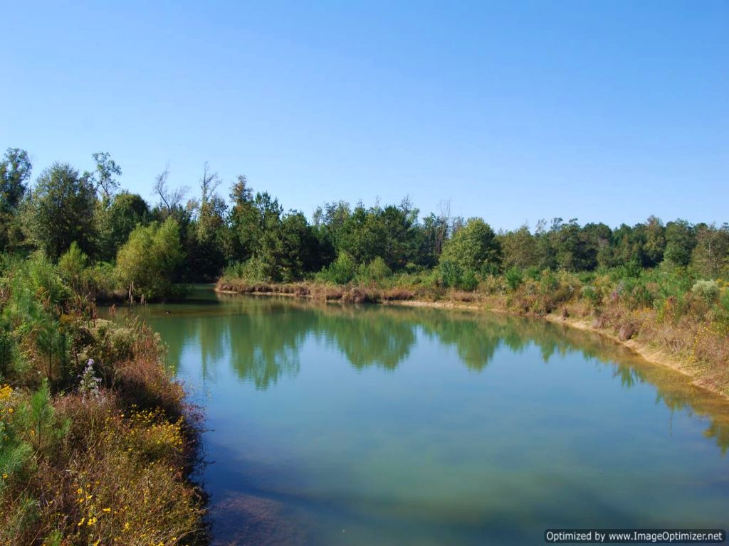 12 Acre Recreational & Homesite : Poplarville : Pearl River County : Mississippi