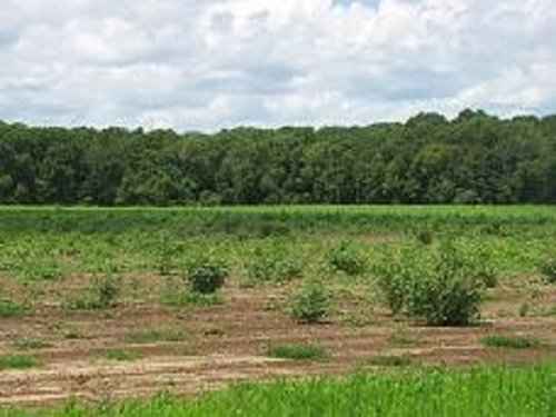 Price Reduction - 408 Acres : Edison : Calhoun County : Georgia