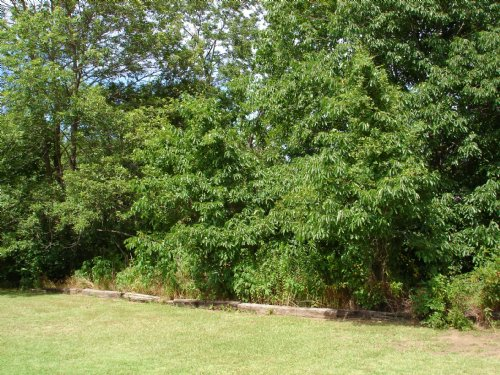Country Home Lot For Sale : Powderly : Lamar County : Texas