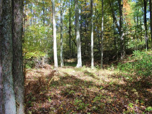 40 +/- Wooded Acres In Unityville : Unityville : Lycoming County : Pennsylvania
