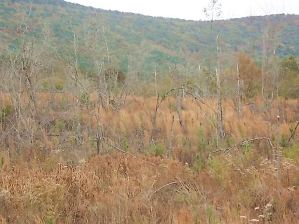 Investment-Grade Timberland : Talladega : Clay County : Alabama