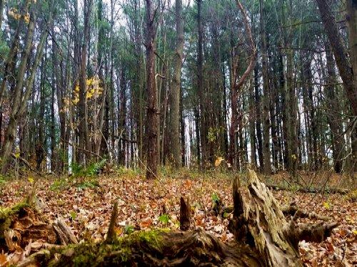 Wooded Acreage Near Salmon River : Pulaski : Oswego County : New York