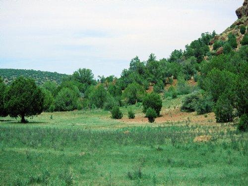 Self Sufficiency Ranch : Saint Johns : Apache County : Arizona