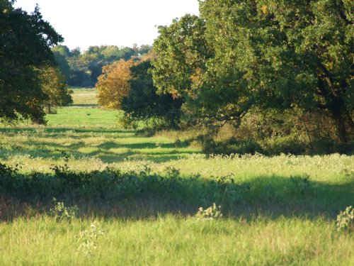 10.4 Acres - Build Your Dream Home : Glen Rose : Somervell County : Texas