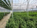 54 Ac & 160,000 Sqft Of Greenhouse : Umatilla : Lake County : Florida