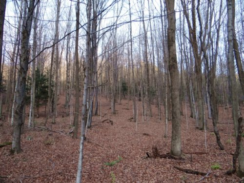Wooded Land With Stream 115 Acres : Plainfield : Otsego County : New York