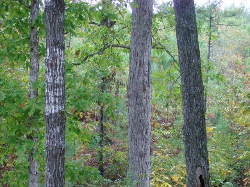 169 Acre Hunting Tract : Buena Vista : Marion County : Georgia