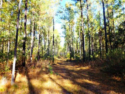 Boaen Road Tract : Springfield : Effingham County : Georgia