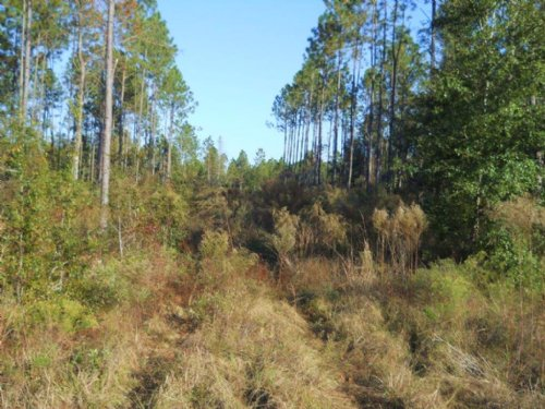 50 Acres On Paved Road : Fort White : Columbia County : Florida