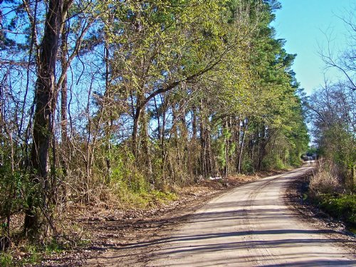 167 Acres Lovelady : Lovelady : Houston County : Texas