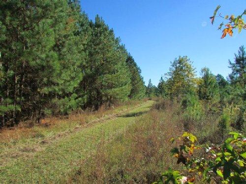 Edmunds Tract : Sumter : Lee County : South Carolina