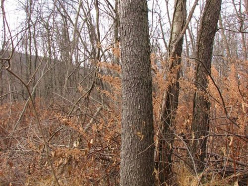 51 +/- Acres, Woods, Fields : Muncy : Lycoming County : Pennsylvania