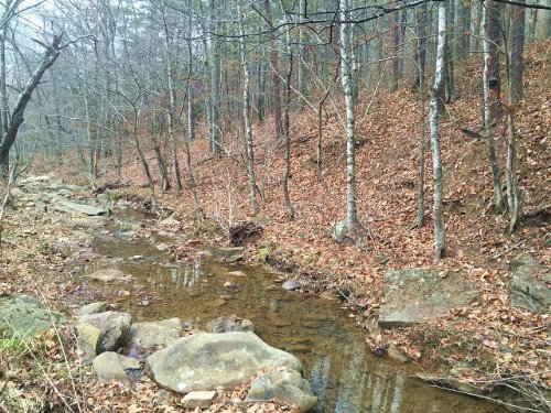37+/- Acres Of Great Timber /creek : Whiteside : Marion County : Tennessee