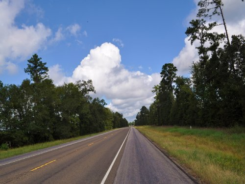 388 Acres Highway 146 : Rye : Liberty County : Texas