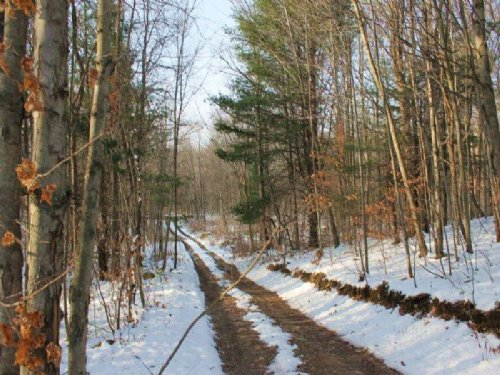 19 Acres Along Tug Hill Trails : Williamstown : Oswego County : New York