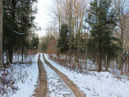 95 Acres With Access To Atv Trails : Williamstown : Oswego County : New York
