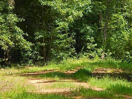344 Acres In Newton County, Mississ : Newton : Mississippi