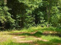344 Acres In Newton County, Mississ : Newton : Newton County : Mississippi