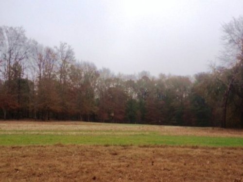 60 +/- Acres Perfect For Hunting : Ariton : Dale County : Alabama