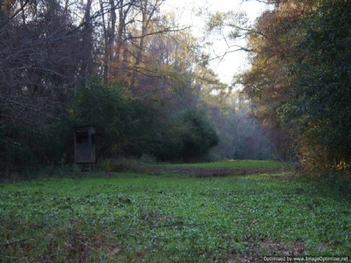 190 Ac. Recreational Tract In Sw Ms : Magnolia : Pike County : Mississippi