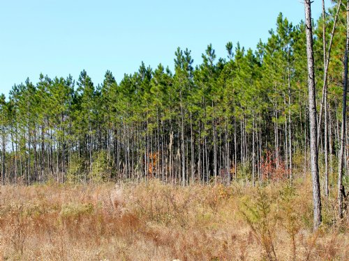 150 Acres Of Land For Sale : Abbeville : Wilcox County : Georgia