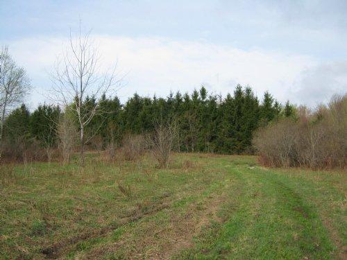 Farmland Near State Forest 57 Ac : Sempronius : Cayuga County : New York