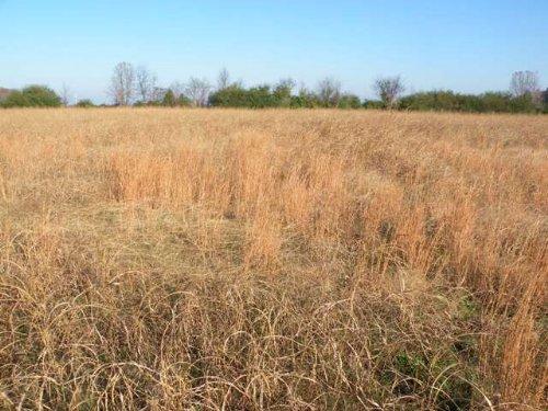 Pasture Land For Sale : Lonoke County : Arkansas