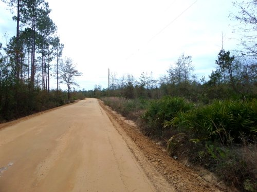 Several 3 Acre Tracts : Hortense : Brantley County : Georgia