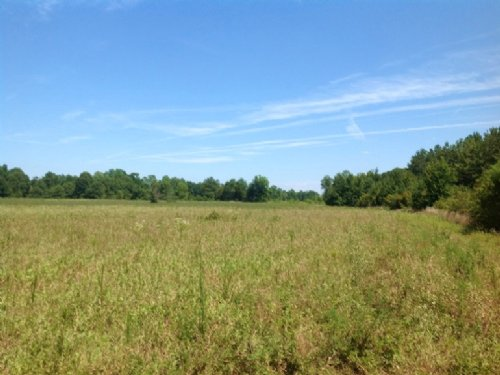 38 Acre Hunting Tract : Orrville : Dallas County : Alabama