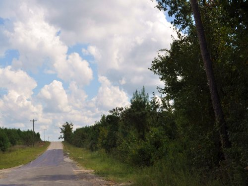 145 Ac Upper Leggett Road : Livingston : Polk County : Texas