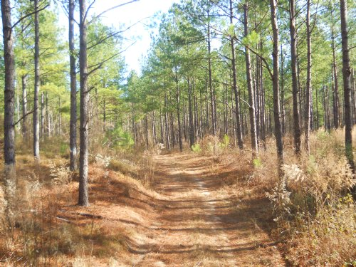 291 Ac Of Big Bucks & Big Timber : Ft. Valley : Crawford County : Georgia