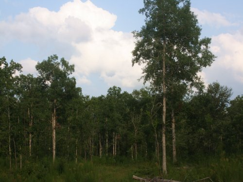 46 Ac- Hardwood Hunting At Its Best : Sontag : Lincoln County : Mississippi