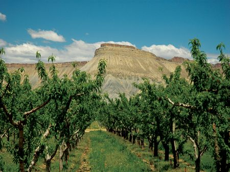 Orchard Mesa Reserve : Palisade : Mesa County : Colorado