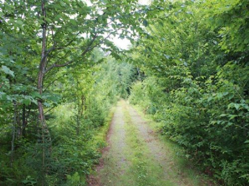 Hunting Land In Tug Hill Region : Lewis : New York